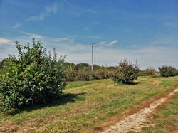 Brookwood Farms