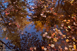 The Reflection of a Changing Season