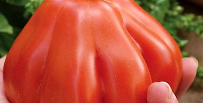 Tomato- Big Pear                                    40 Seeds