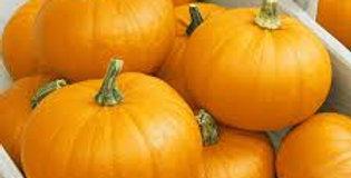Pumpkin- Small Sugar                                       6 Seeds