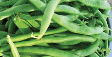 Bean- Sunshine (Bush Bean)                   20 Seeds