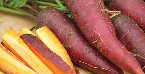 Carrot- Cosmic Purple                    100 Seeds