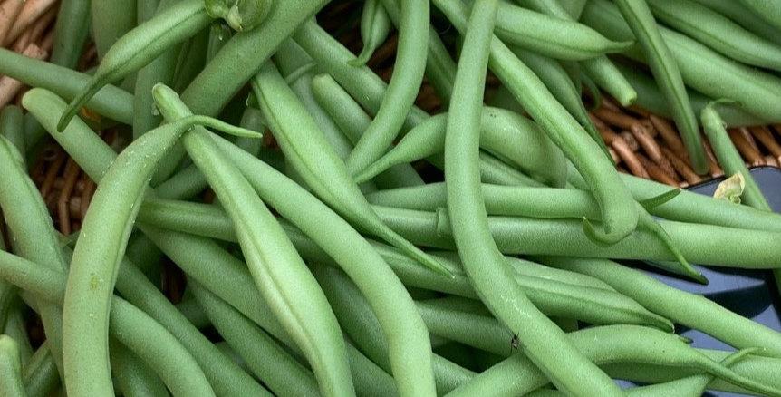 Bean- Strike (Bush Bean)                   15 Seeds