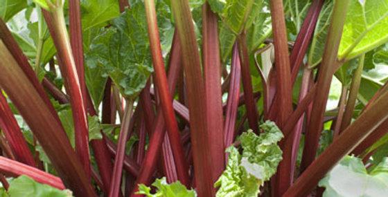 Rhubarb- Glaskins                                                  20 Seeds