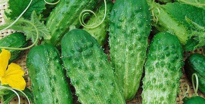 Cucumber- National Pickling           20 Seeds