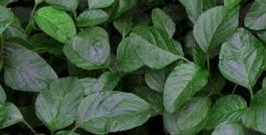 Spinach- Black Magic                      20 Seeds