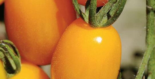 Tomato- Sweet Golden    F1                25 Seeds