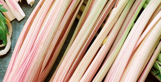 Celery- Peppermint Stick              300 Seeds