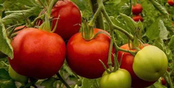 Tomato- Floralou                                40 Seeds