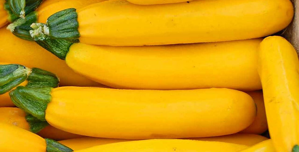 Zucchini- Golden                                  10 Seeds