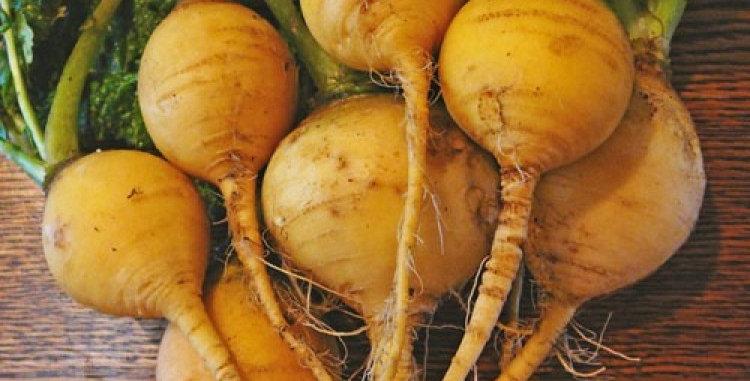 Turnip- Golden Globe                     150 Seeds