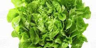 Lettuce- Oakleaf Green                     100 Seeds