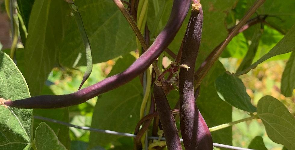 Bean- Purple King                              15 Seeds