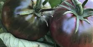 Tomato- Black Russian                      40 Seeds