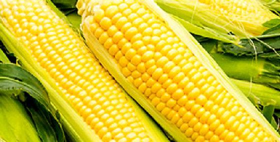 Corn- Jolly Roger                   20 Seeds