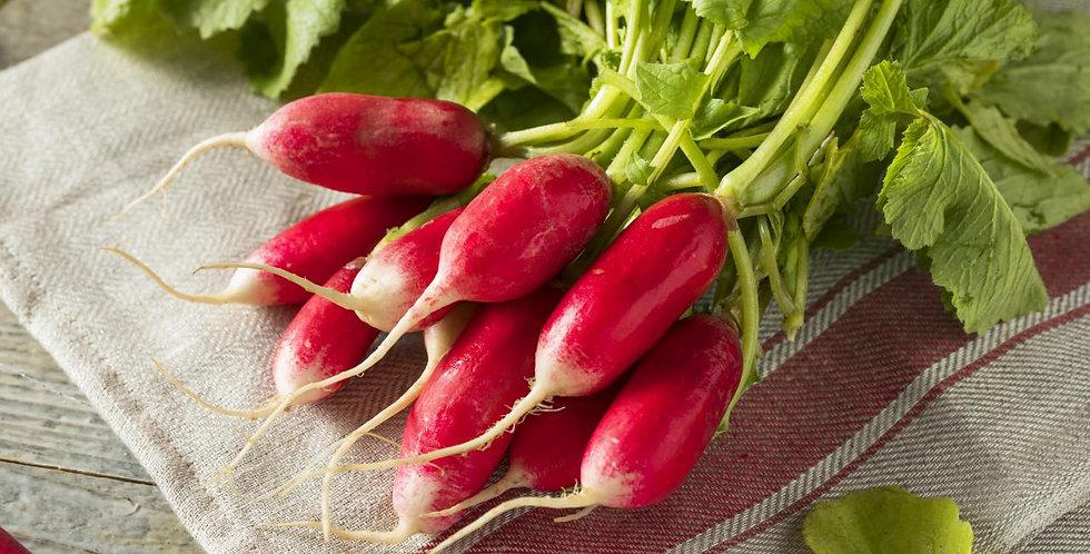 Radish- French Breakfast                 25 Seeds