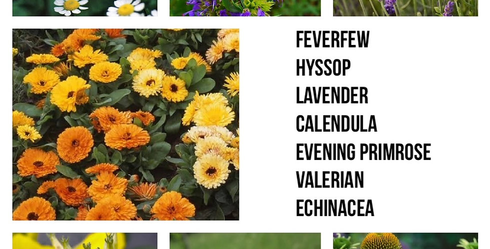 Medicinal Herb Pack                           7 Packs