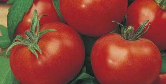 Tomato- Grosse Lisse                       40 Seeds