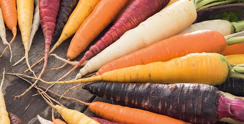 Carrot- Harlequin F1                     100 Seeds