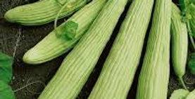Cucumber- Armenian                         15 Seeds