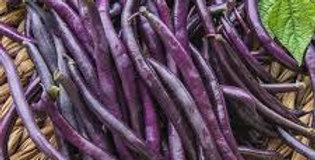Bean- Purple Queen                              15 Seeds