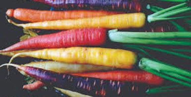Carrot- Rainbow Mix                         100 Seeds