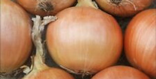 Onion- Early Creamgold        50 Seeds