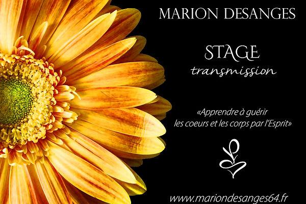 stage 1 siteweb.jpg