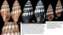 more gemmata b.JPG