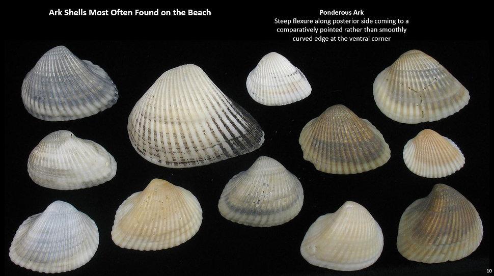 Beach Arks 10.JPG