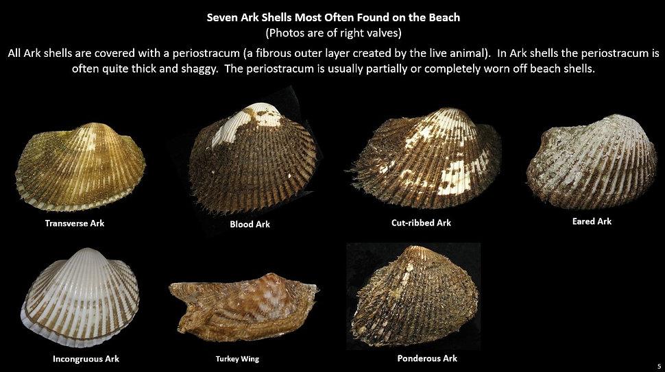 Beach Arks 5.JPG