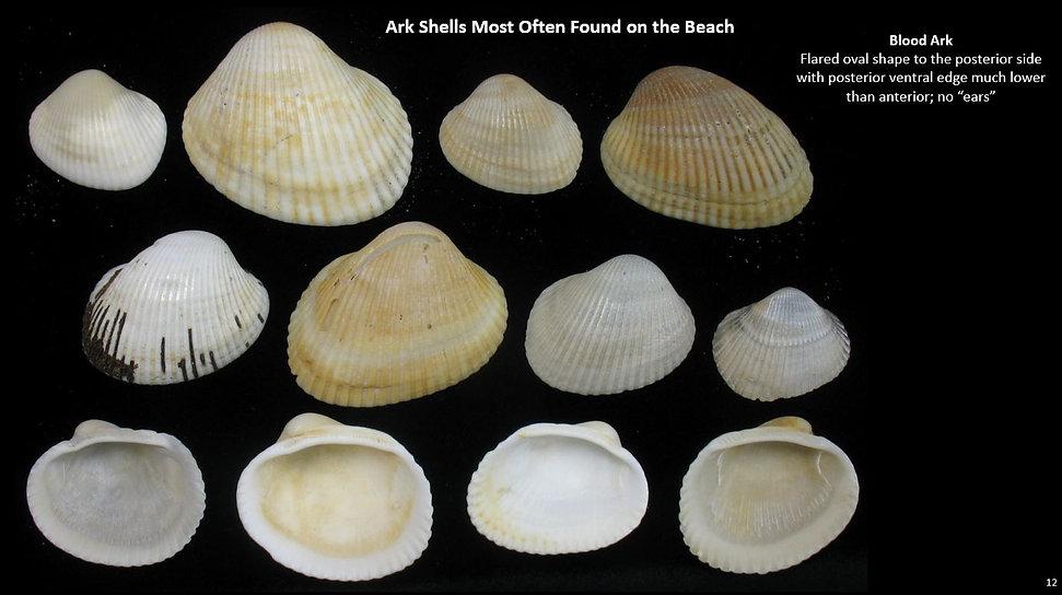 Beach Arks 12.JPG