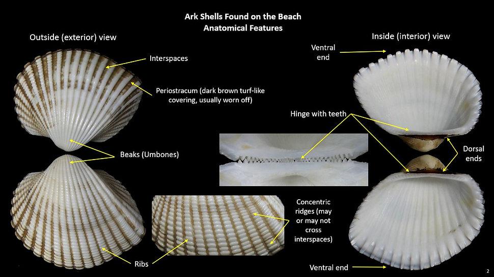 Beach Arks 2.JPG