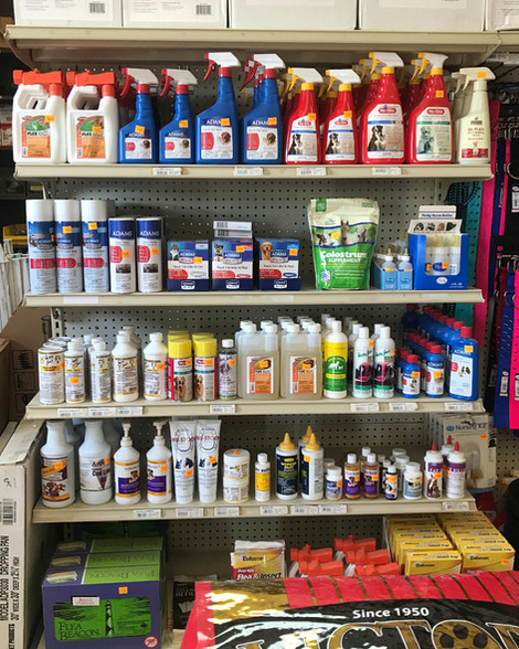 Flea & Tick Control for Your Pets