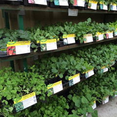 We Stock Fall & Spring Vegetable Plants