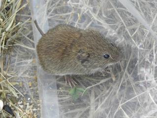 Small mammals at Walmsley