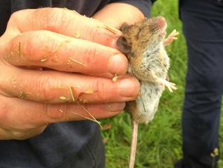 Small Mammals at Seaton