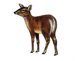 Invasive Mammals with Kate Hills