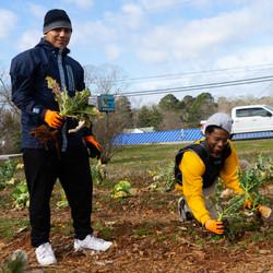 Solar Healing Community Garden Volunteer Day 1/24