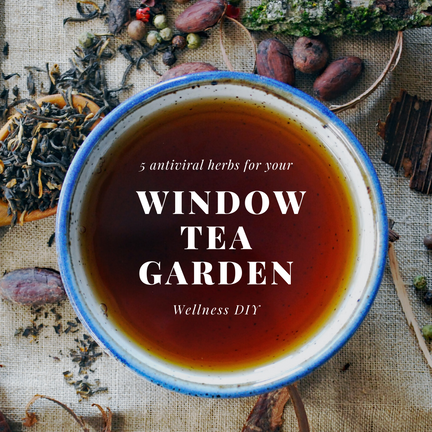 5 Antiviral Herbs For Your Window Tea Garden