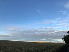 Weizenfeld im Abendlicht auf der Halbinsel Liddow