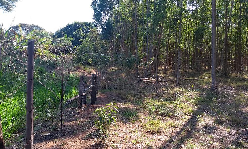 REF 84 Áreas de Gleba, 8000 m², na região de Piraju/SP