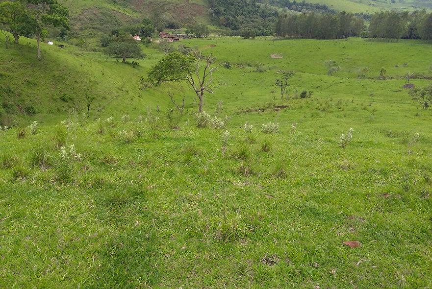 REF 34 Sitio, 54 alqueires, na região de Piraju/SP