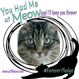 ForeverPledge_Skeamer.jpg