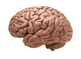 Animated-Brain-PNG-Image-Transparent-Bac