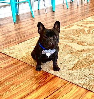 Famous Frank the Frenchie