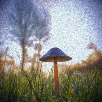 mushroom greg rosenke_edited_edited.jpg