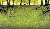 network-mycorrhizal-fungi-trees-forest-c