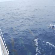 g 21 Dolphins.jpg