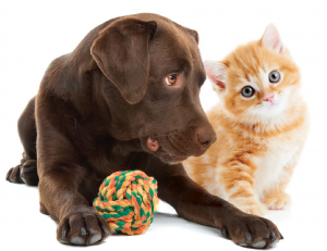 dog-and-cat-toys.png